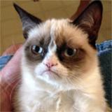 Extra-Grumpy Cat