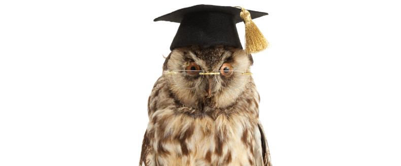 A wise owl joins Epolitics.com webinars
